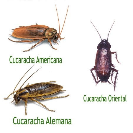 cucarachas-cosaplag