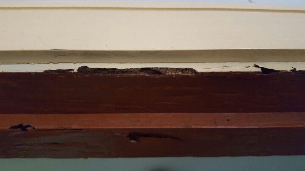 termitas en galicia - cosaplag