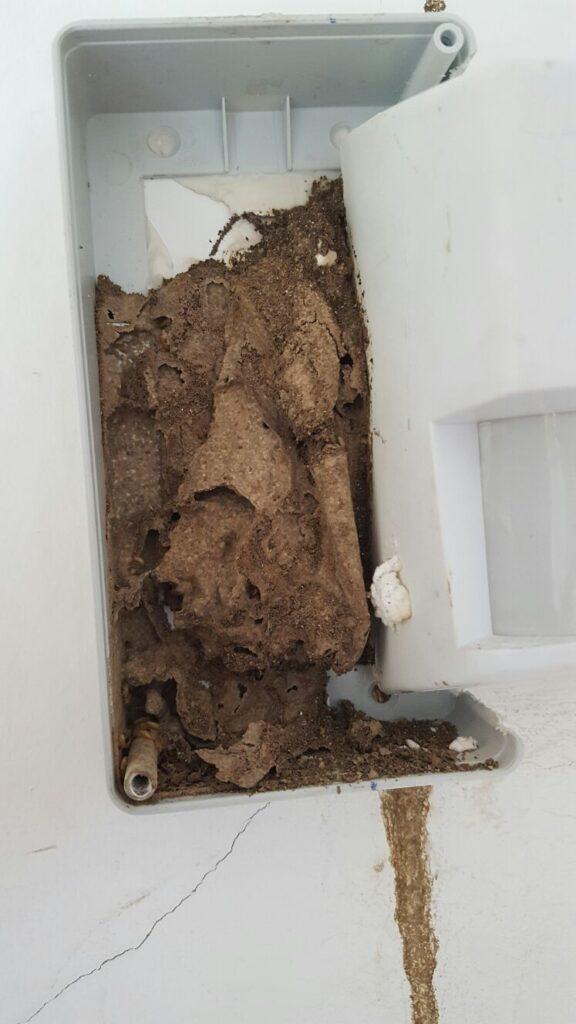 termitas en galicia cosaplag