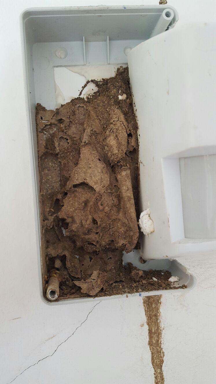 Termitas en galicia cosaplag - Acabar con las termitas ...