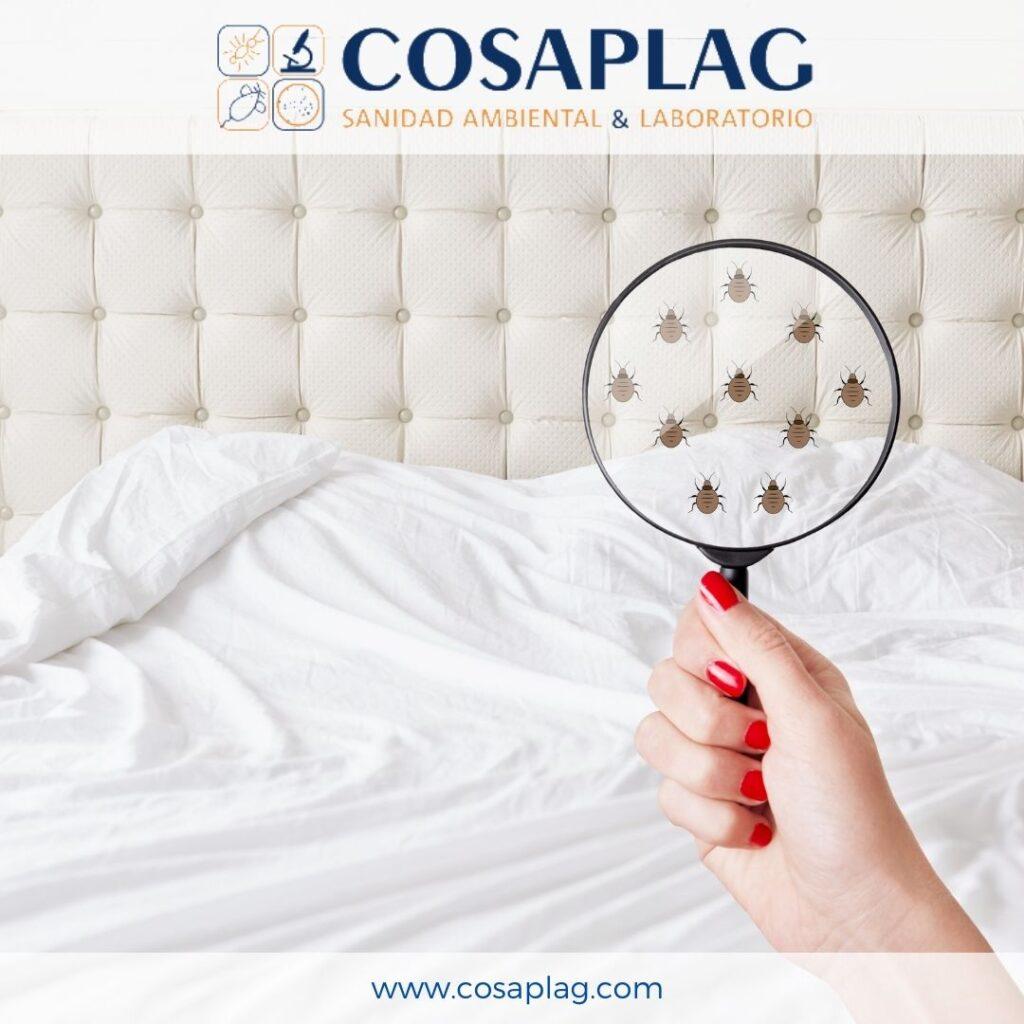 control de plagas cosaplag_chinches de cama
